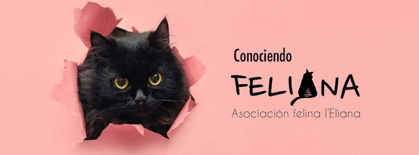 feliana-slide