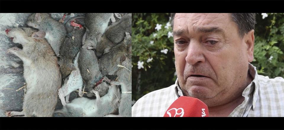 El jard n de un vecino de l eliana invadido por una plaga for Ahuyentar ratas jardin